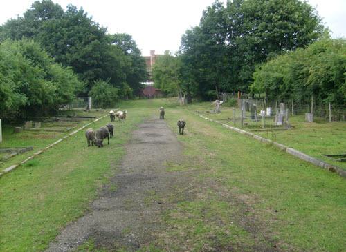 RiceLane City Farm